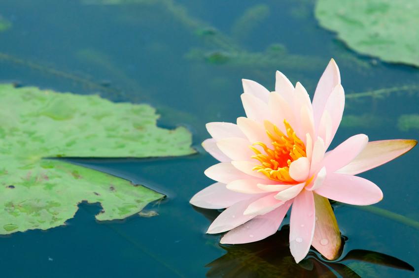 Esercizio di meditazione su un fiore